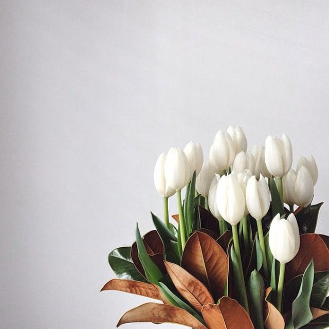 White Tulips are my all time favorite.
